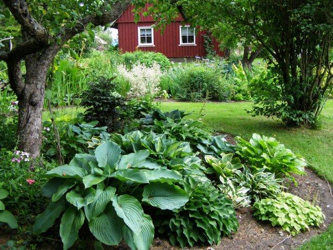 home-garden