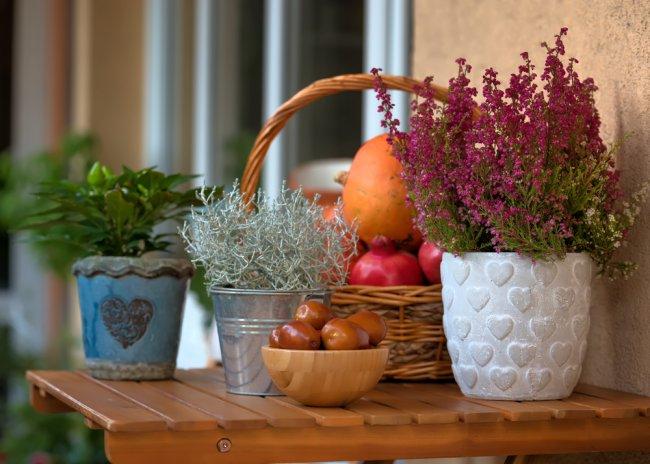 sügis, taimed