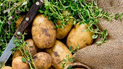 potato, thyme